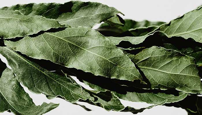 Les feuilles de laurier
